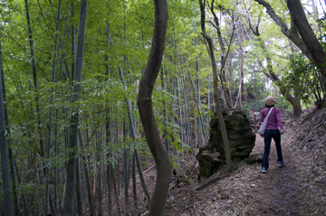 鎌倉天園ハイキングコース