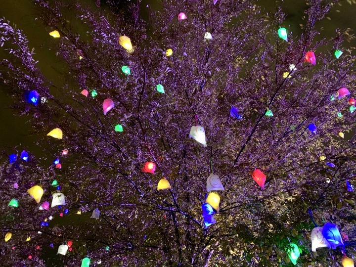 ひかりの実2018「防災の樹」